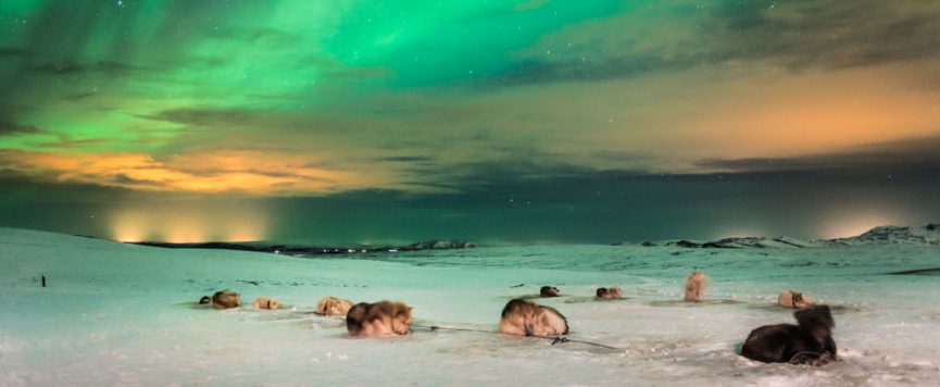 Husky dogs under the Northern Lights